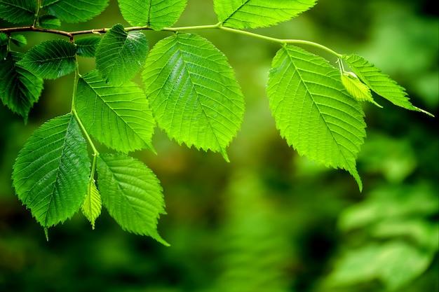 森の木に葉します。自然の緑の木の日光の背景。