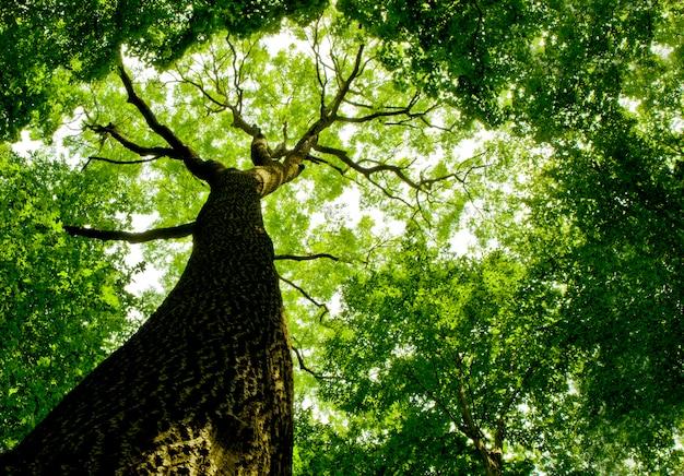 下から見た森の木にクローズアップ