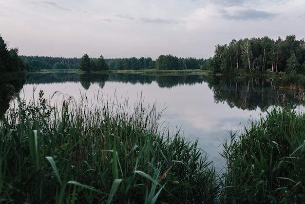 河岸。湖を背景に霧。野生の自然。田舎の休暇の概念。釣りの日に関する記事。パイク、パーチ、コイの釣り。