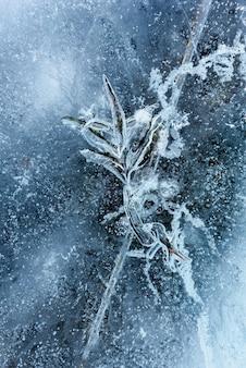 Красивый лед байкала с абстрактными трещинами и зелеными растениями в глубине