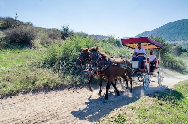 夏のセルチュクで馬車で旅行する観光客