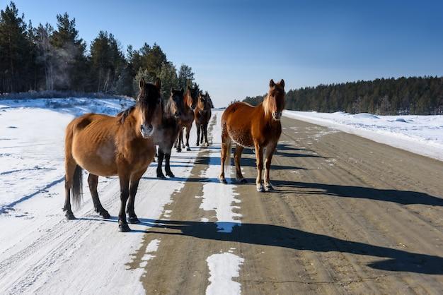 道を歩いて野生の茶色の馬