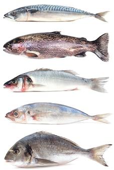 海魚コレクション