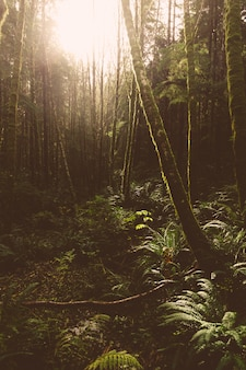 Красивый выстрел из зеленых деревьев в лесу