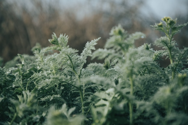 フィールドの緑の植物