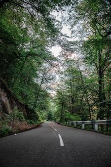 Пустая дорога и деревья