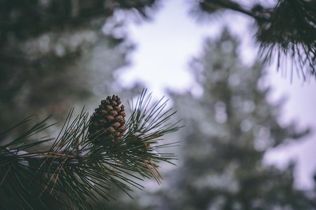 松の木のクローズアップ写真