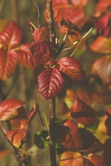 Вертикальная картина красных листьев в саду под солнечным светом