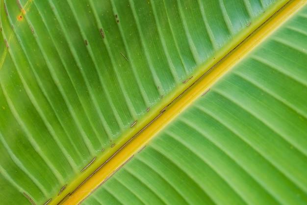 大きな美しい濡れた緑の葉-完璧な自然の背景