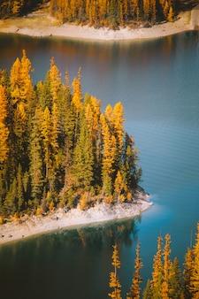 背の高い黄色の葉のある木が付いている海岸の真ん中に水の垂直ショット