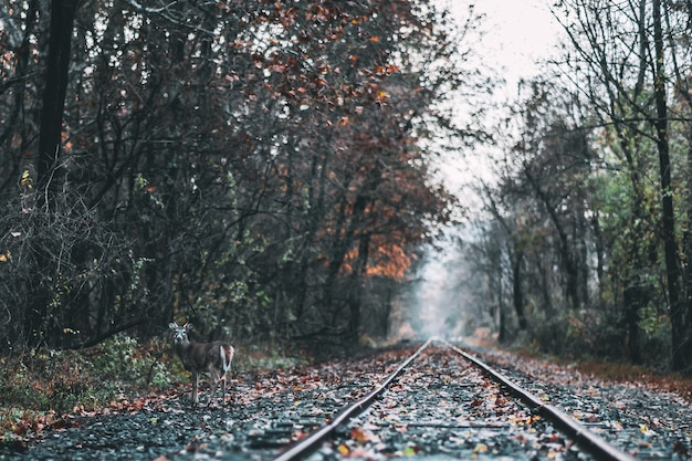 秋の間に森の鉄道の美しいショット