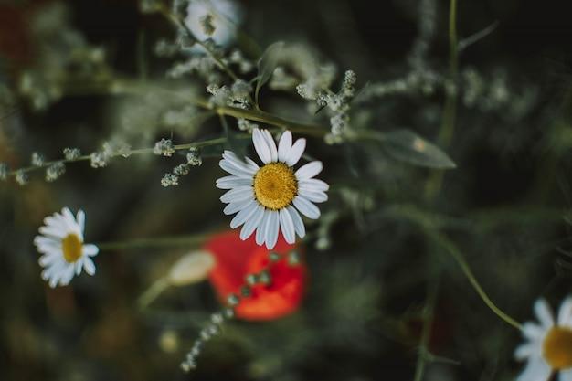 背景をぼかした写真と白い花の至近距離ショット