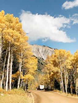 昼間の曇り空の下で黄色の葉っぱの木の真ん中に未舗装の道路の垂直ショット