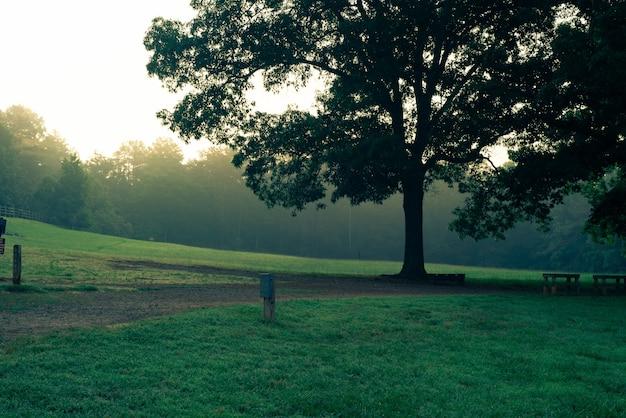 Одно большое красивое дерево в парке рядом с деревянными столами и скамейками в парке