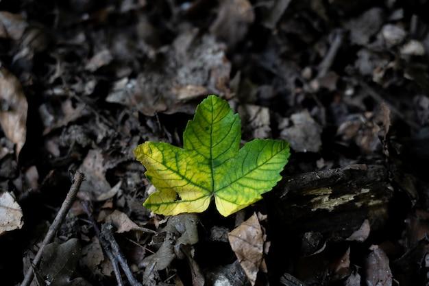 森の中の美しい野生の緑の葉のクローズアップショット