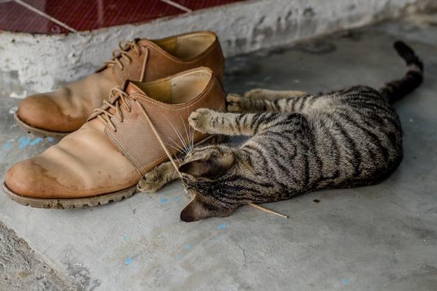 Домашний милый котенок играет с шнурками