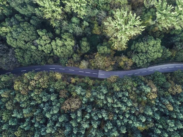 厚い森を通過する曲線の細い道の空中ショット
