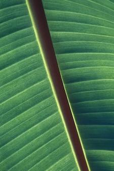 緑の葉のパターンとテクスチャの垂直のクローズアップショット