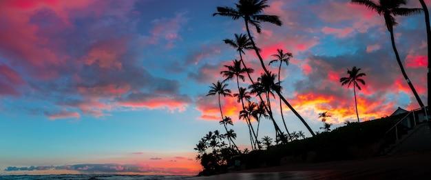 背の高いヤシの木と空に広がる息を呑むような赤と紫の雲の美しいパノラマ