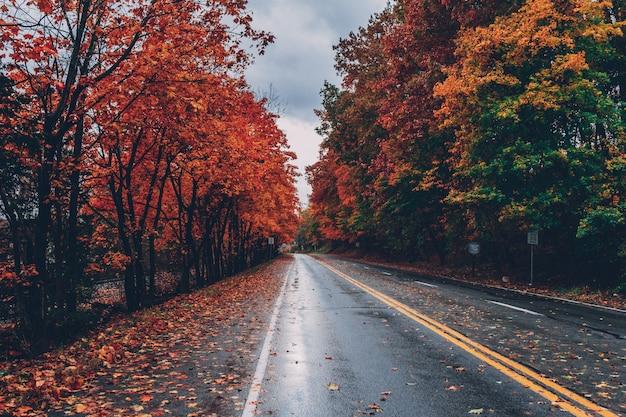 Дорога окружена деревьями с разноцветными листьями во время падения