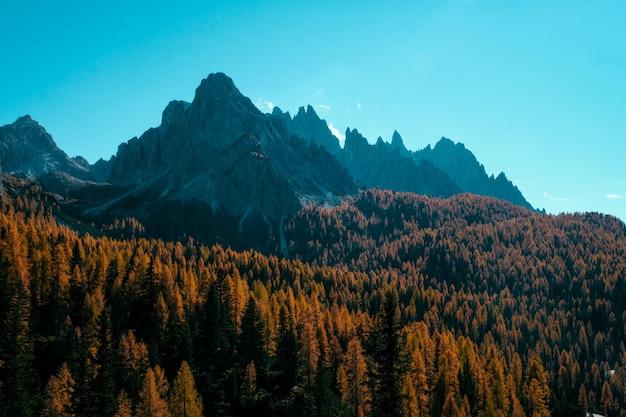 Красивый снимок желтых и коричневых деревьев на холмах с горами и голубым небом