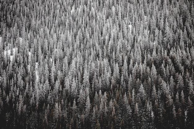 トウヒの山の美しいワイドショット