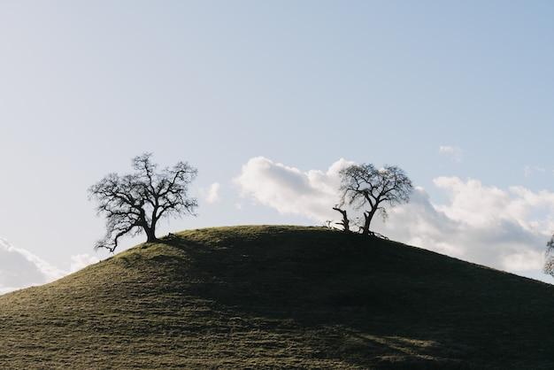 白い雲と澄んだ空の下で緑の丘の上の木のワイドショット
