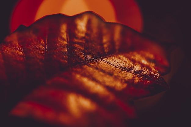 美しい黄金の葉のテクスチャのクローズアップ