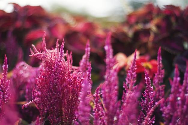ピンクの花の山のクローズアップショット