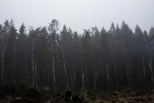 Красивый снимок леса с высокими деревьями и растениями с туманным небом