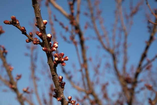 咲く枝のクローズアップ