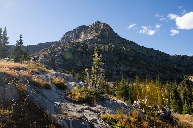 昼間の青空の下で山の近くの木のある丘の美しいショット