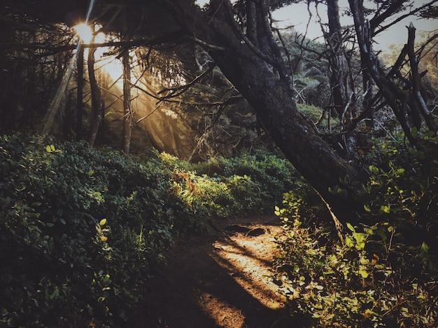 Путь в середине леса с солнцем сквозь деревья