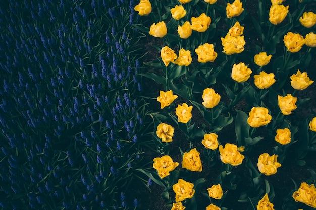Высокоугольный снимок кровати из желтых цветов в красивом зеленом поле