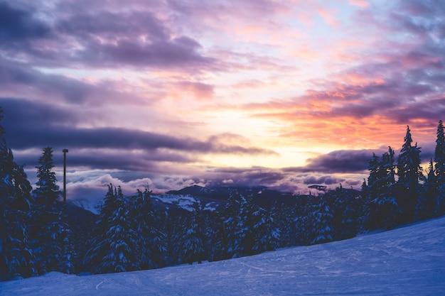Красивый широкий выстрел из елей под розово-фиолетовым небом с облаками