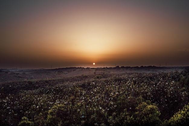 日没時に花の山のロングショット