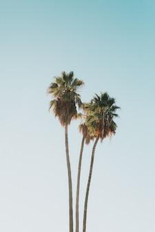 Красивые высокие экзотические кокосовые пальмы