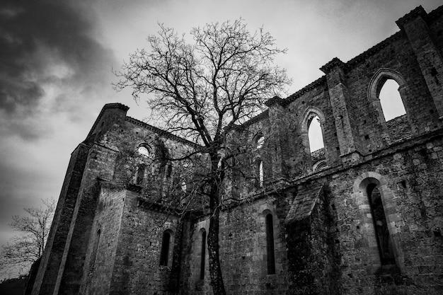 黒と白の背の高い木の近くにアーチ型の窓がある廃墟のローアングルショット
