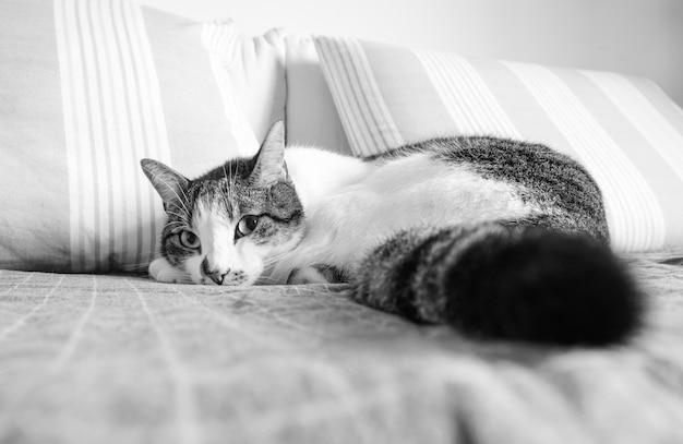 Кошка лежит на диване и смотрит в камеру в черно-белом