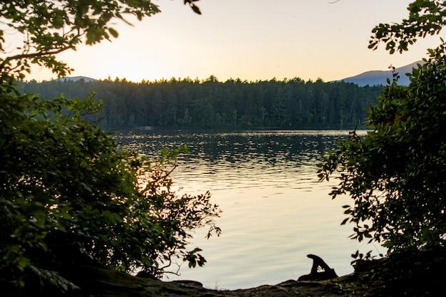 森と夕暮れ時、海の近くの木