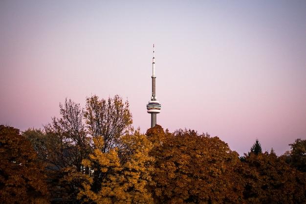 Лес с высокой маяковой башней