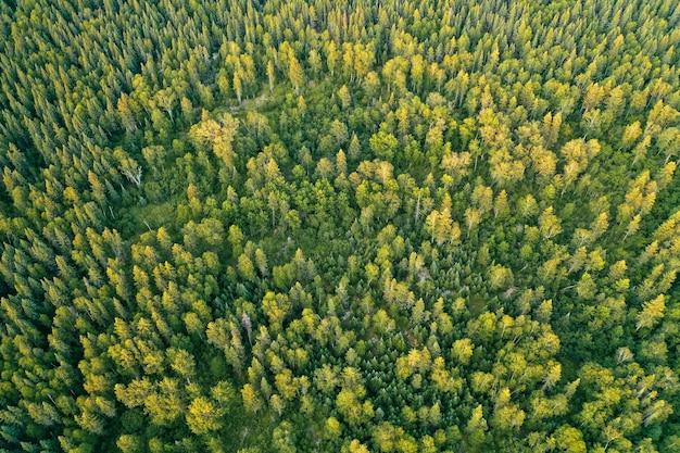 晴れた日の間に厚い美しい森のオーバーヘッド空中ドローンショット