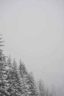 Вертикальный снимок снежных елей в оттенках серого с выбором текста для размещения на пустом месте