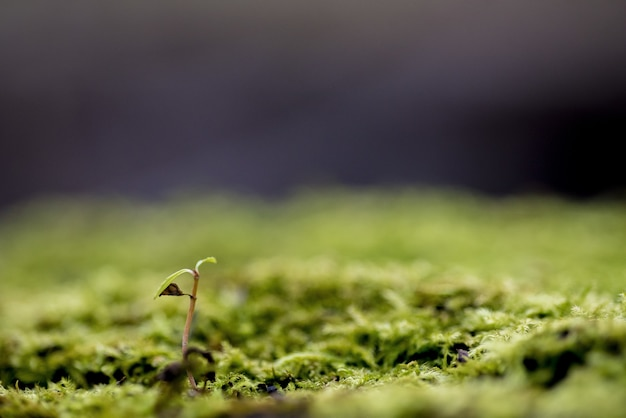 背景をぼかした写真-育った概念でコケに覆われた地面で育つ植物のクローズアップショット