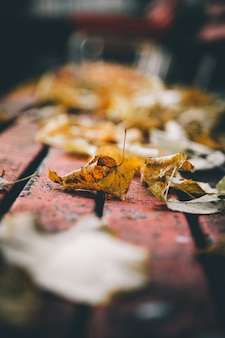 背景をぼかした写真のベンチに黄色の葉の垂直のクローズアップショット