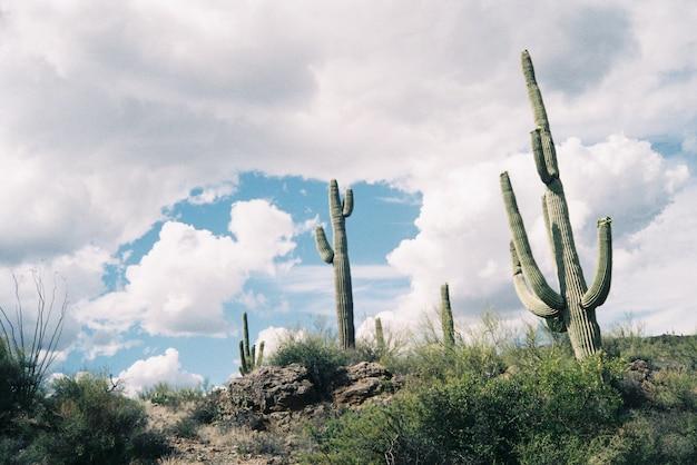 息をのむような曇り空の下で緑のサボテンのある岩が多い丘の美しい風景