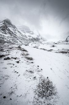 Вертикальная съемка снежного леса, окруженного холмами под чистым небом