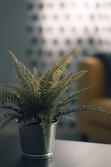 屋内の金属鍋に緑の美しい植物