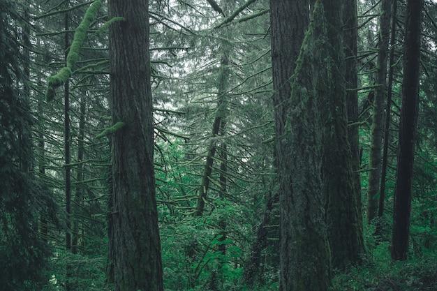 霧の日に田舎の森の美しい風景