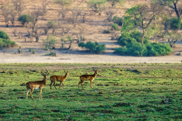 自然がぼやけている芝生のフィールドに立っている鹿の美しいショット
